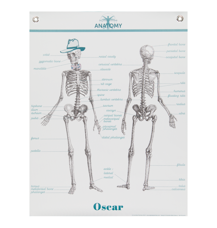 Poster in canvas - Anatomy