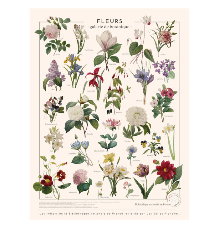 Poster in canvas French national Library - Flowers