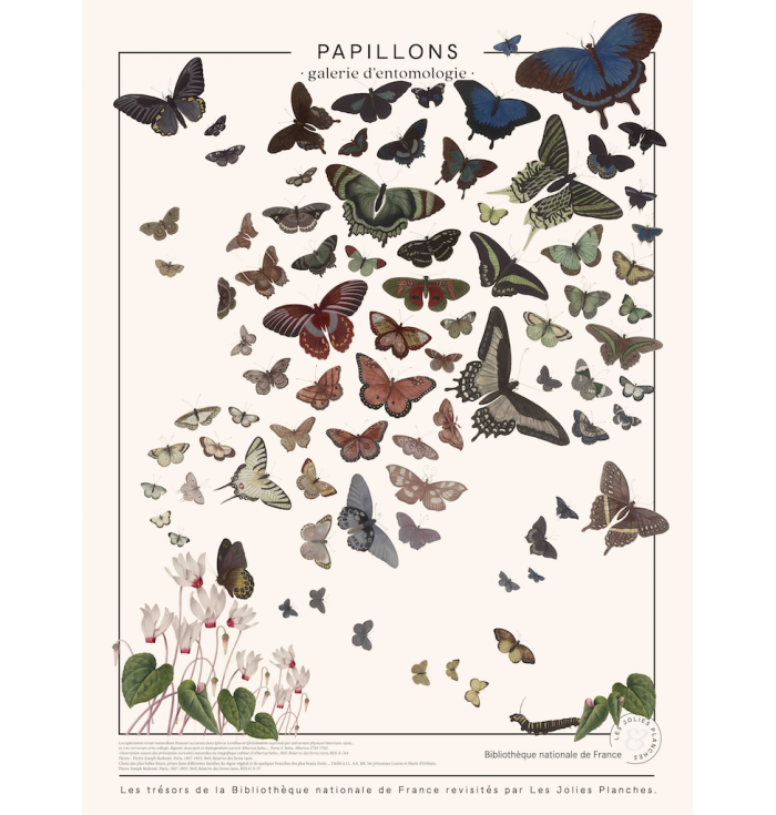 Poster in canvas French national Library - Butterflies