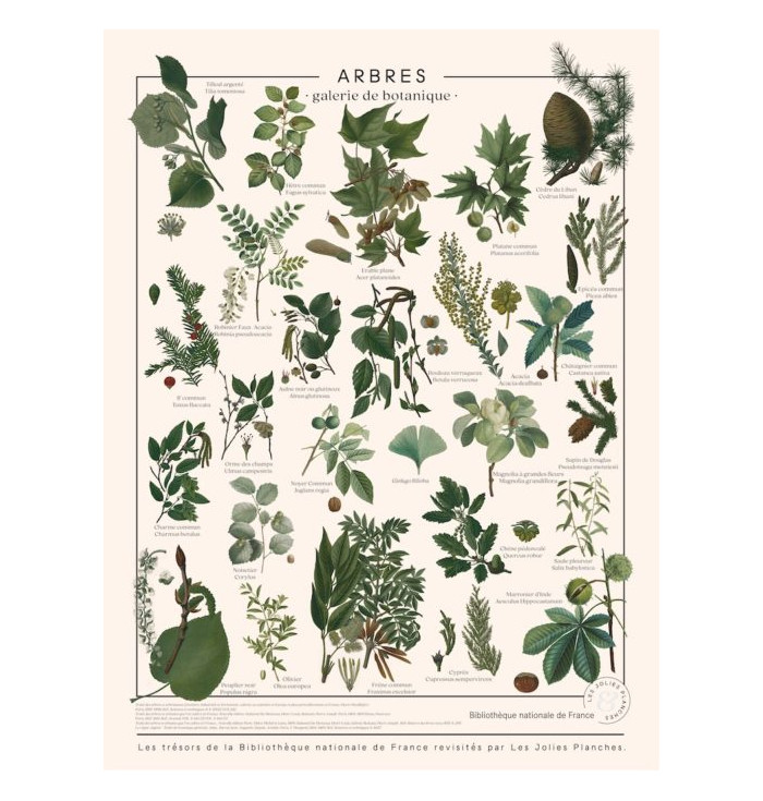 Poster in canvas French National Library - Alberi