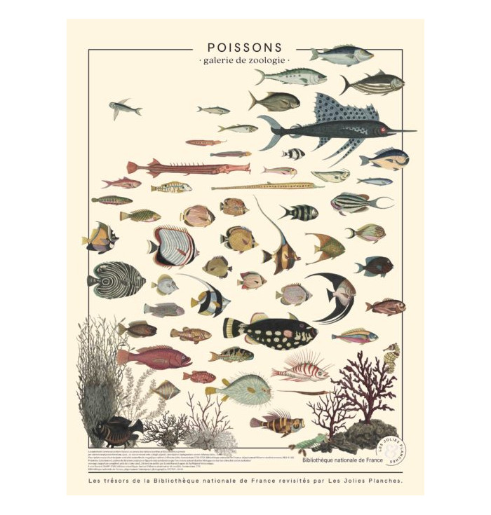 Poster in canvas French national Library - Fishes