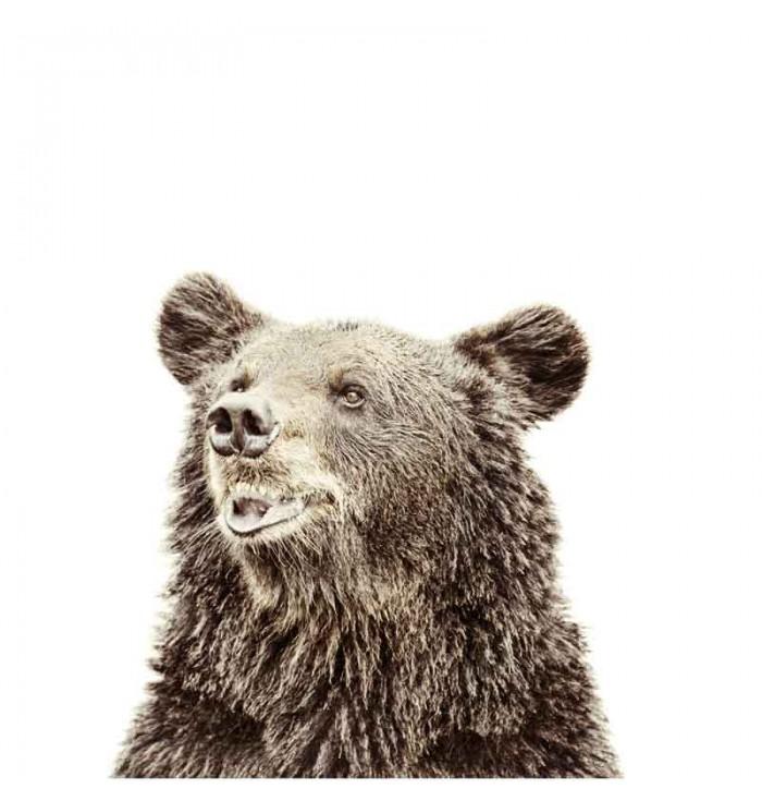 Carta da parati magnetica - orso - Groovy Magnets