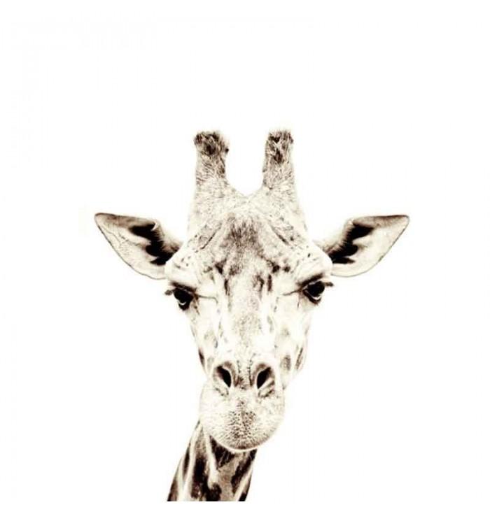 Carta da parati magnetica - giraffa - Groovy Magnets