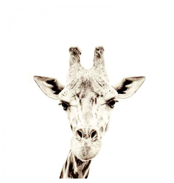 Wallpaper magnetic with giraffes